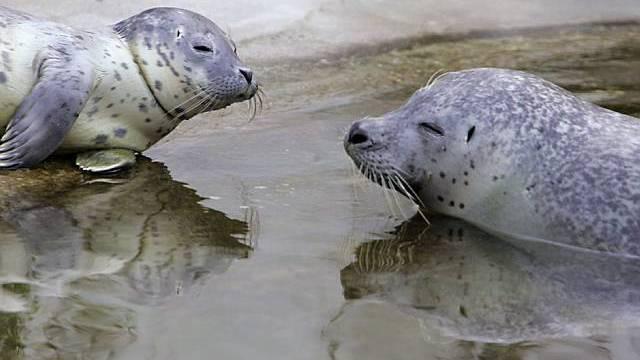 Robben sollen besser geschützt werden