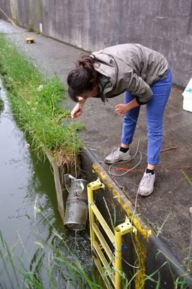 Zweimal wöchentlich werden die Reusen aus dem vier Meter tiefen Wasser geholt.