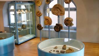 Das Sauriermuseum Frick wird finanziell unterstützt.