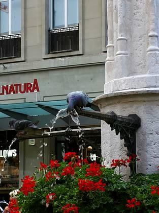 Eine durstige Taube in der Berner Altstadt - na dann Prost!