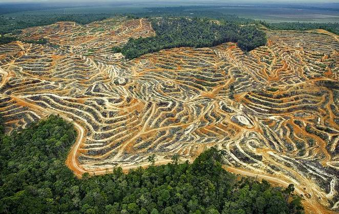 Gerodete Tropenwaldfläche in Malaysia: Der Ölpalmenanbau frisst den Dschungel förmlich auf.