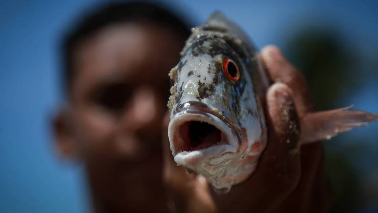 Über 200 Orte in Brasilien von Ölpest betroffen: Ein Fischer hält einen verschmutzten Meerfisch bei Recife in der Hand.