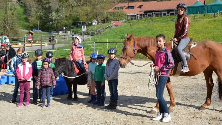 Beim Umgang mit Pferden nahmen vor allem Mädchen teil, die Jungs waren in der Minderzahl.