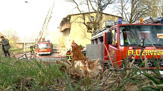Grossbrand zerstört Hühnerfarm in Veltheim: Die Feuerwehr bekämpft die Flammen in Veltheim mit einem Grossaufgebot. Viele Tiere verlieren im Feuer ihr Leben. (Tele M1, 17.3.2015)