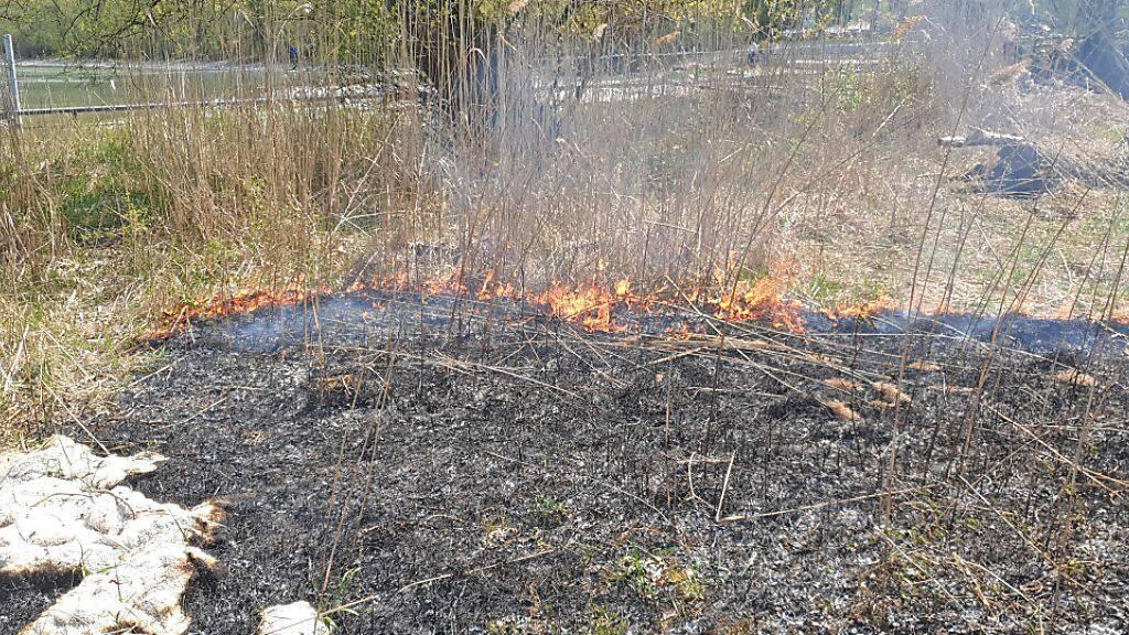 Rund 400 Quadratmeter Schilf wurden in Scherzingen TG ein Raub der Flammen.