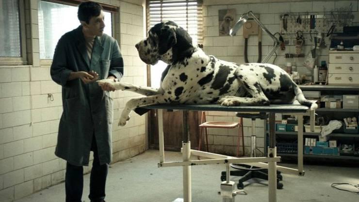 """Das Hunde-Ensemble  aus dem Film """"Dogman"""" - hier ein Szenebild - hat in Cannes die diesjährige Hunde-Palme erhalten. Die Auszeichnung wird seit 2001 verliehen. (Archivbild)"""