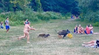 Der nackte Schwimmer hatte Glück: Das Wildschwein tritt in einen Karton, welcher ihn abbremst.