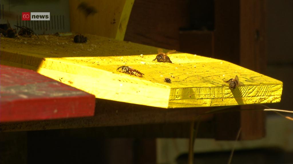 Bedrohte Bienen