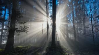 Ein Frühlingsmorgen im Boswiler Wald.