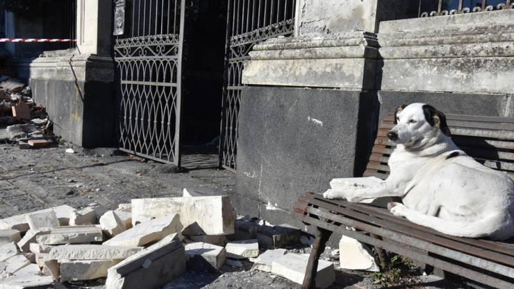 Schäden nach Erdbeben auf Sizilien: Ein Hund geniesst die Sonne zwischen von einer Fassade abgebrochenen Trümmern.