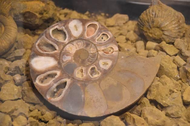 Ammonit mit Kristalleinschlüssen