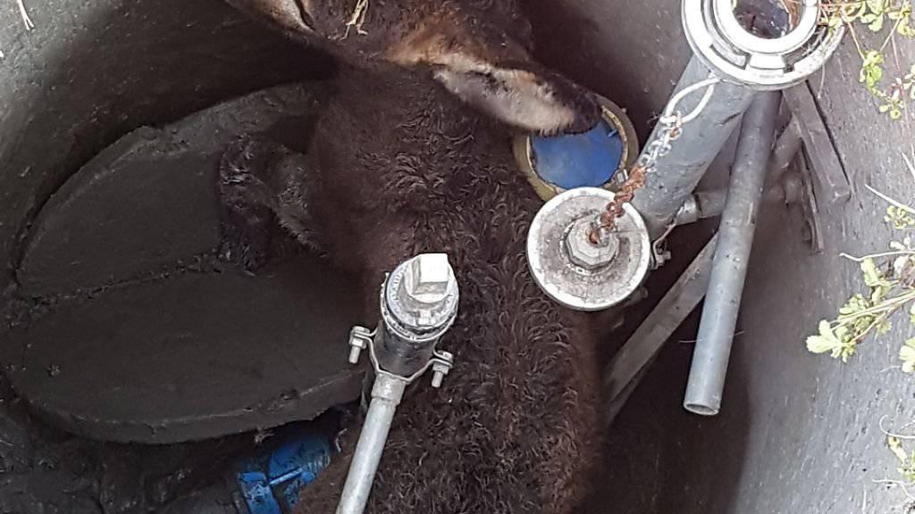 So fanden die Polizisten den Esel vor: gefangen in einem Betonschacht.