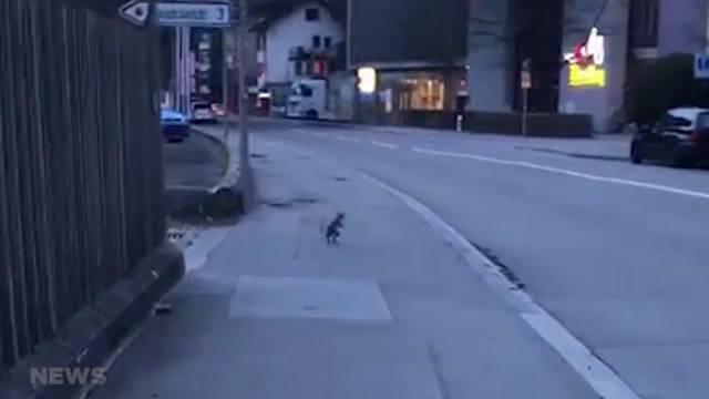 Mysteriöser Tierbesuch in Bern: Was ist es?