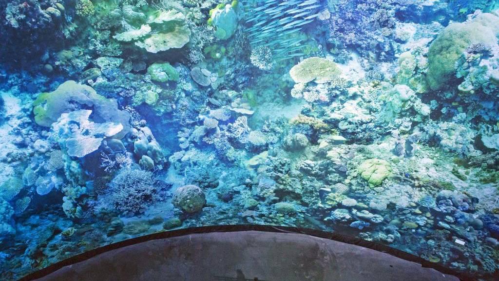Kaum neue Korallen im Great Barrier Reef