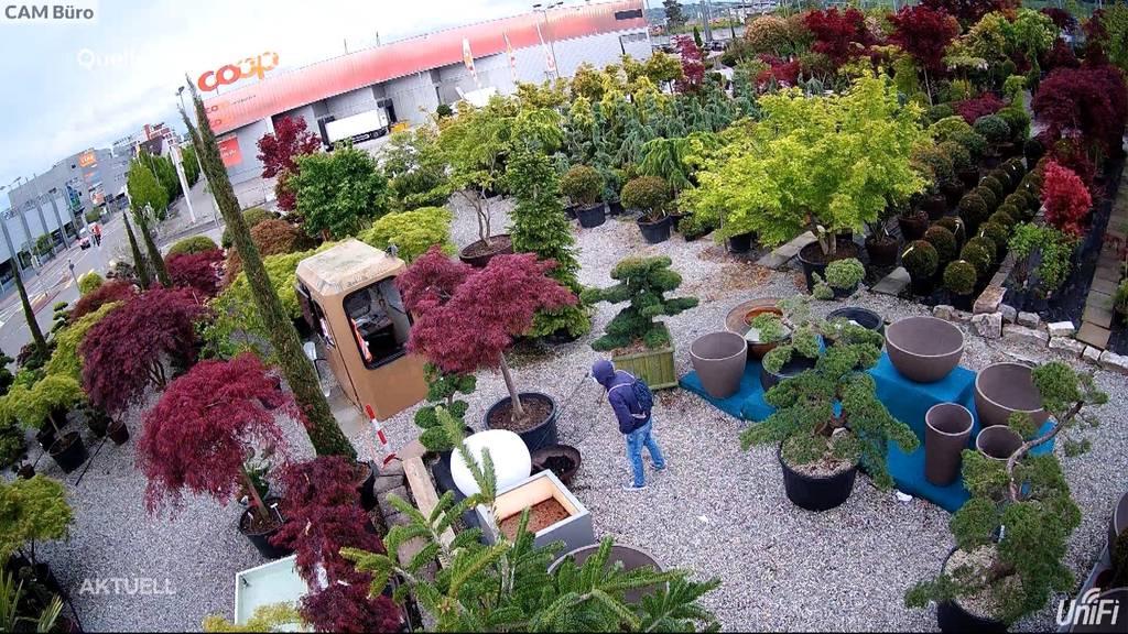 Gartencenter-Einbruch in Spreitenbach AG