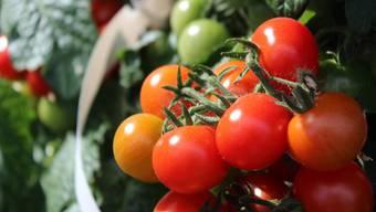 Kein Garten? Macht nichts! Auch auf dem Balkon kann man Gemüse wie diese Tomätli anbauen – dass es schmeckt, zeigt eine Degustation am Markt.