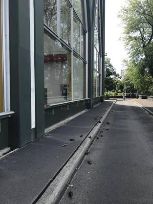 Beim Kraftwerk in Birsfelden starben in der Nacht von Samstag auf Sonntag 32 Singdrosseln.