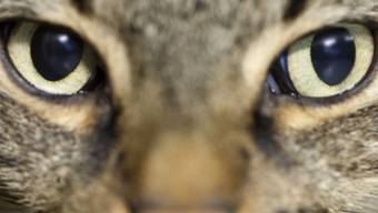 """""""Ein Hund ist ein Soldat, die Katze ist ein Detektiv"""", sagt der Autor Akif Pirincci"""