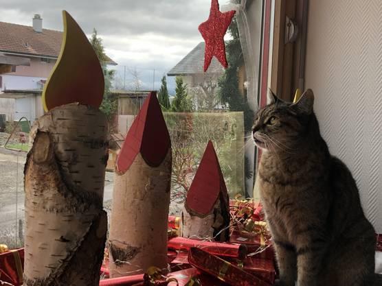 «Meine Katzen Joy und Chrümeli lieben es im Adventfenster zu sitzen», schreibt Jolanda Ernst aus Utzenstorf zu diesem Foto.