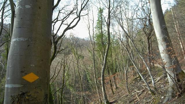 Die Bözberger lassen den Wald künftig vom Brugger Forstbetrieb bewirtschaften.