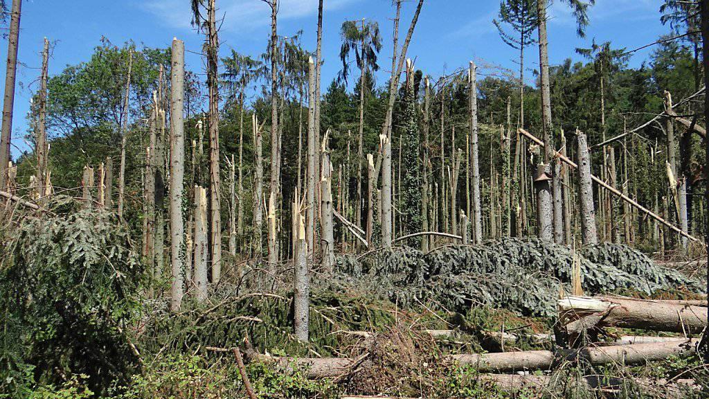 Anfang August hat ein Sturm im Kanton Thurgau 15'000 Kubikmeter Holz geworfen. Rund die Hälfte davon sind Fichten.