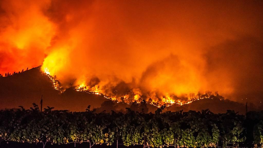Von den bewaldeten Hügeln in der Nähe von Calistoga nahe von Weinreben schlagen Flammen des «Glass»-Feuers empor. Foto: Imagespace/ZUMA Wire/dpa