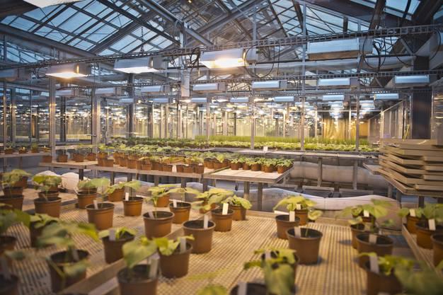 In den Gewächshäuser im oberen Stock wird auch mit Pflanzenschutzmittel geforscht.
