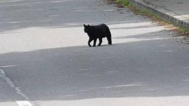 Katze führte zu einem Verkehrsunfall
