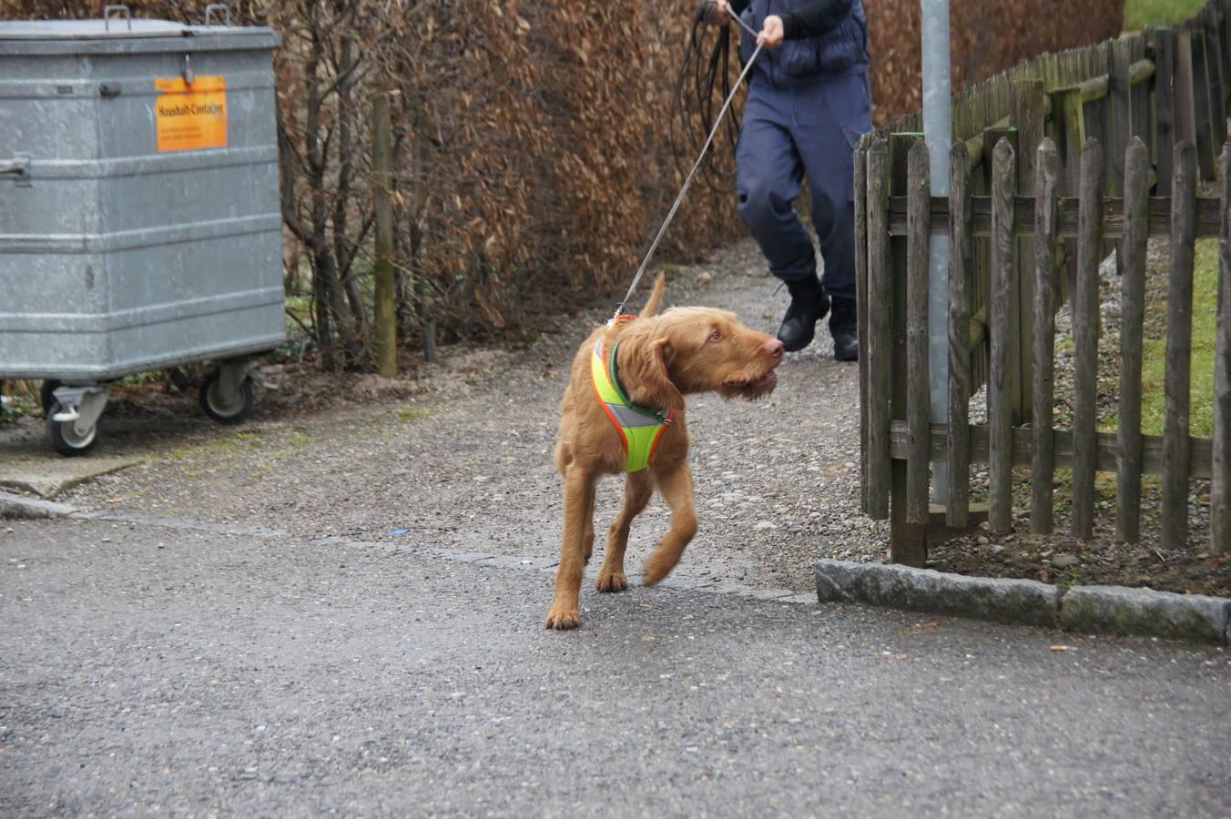 Bei der Kantonspolizei St.Gallen arbeiten 29 Hunde, darunter Lupo. (© Kapo SG)
