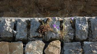 Stein des Anstosses war in diesem Fall eine Steinmauer. (Symbolbild)