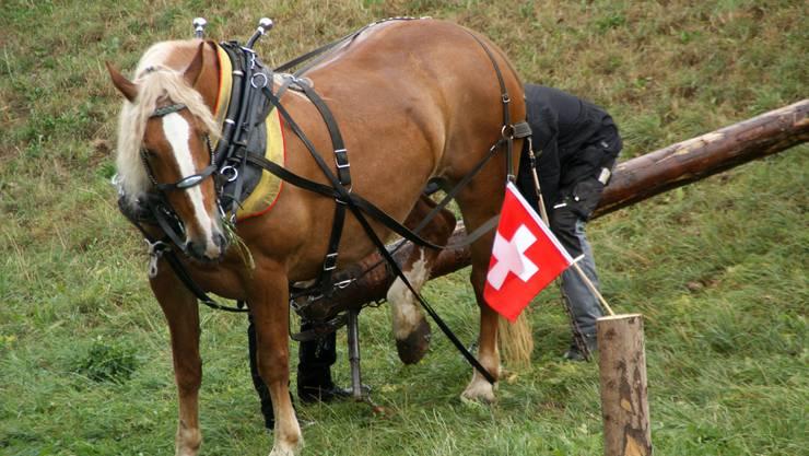 Ruhig steht das Pferd und wartet, bis der Fuhrmann und ein Helfer die verhedderte Kette gelöst haben