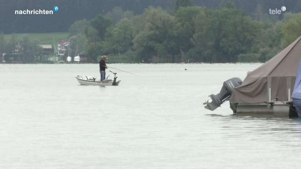 Immer mehr Welse in Zentralschweizer Seen