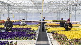 Die Forderungen werden lauter: Gartencenter und Blumenläden könnten zuerst wieder öffnen.