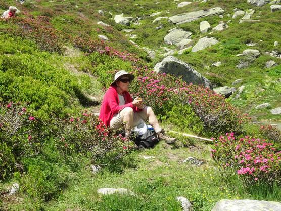 Inmitten blühender Alpenrosen beim Lag Serein