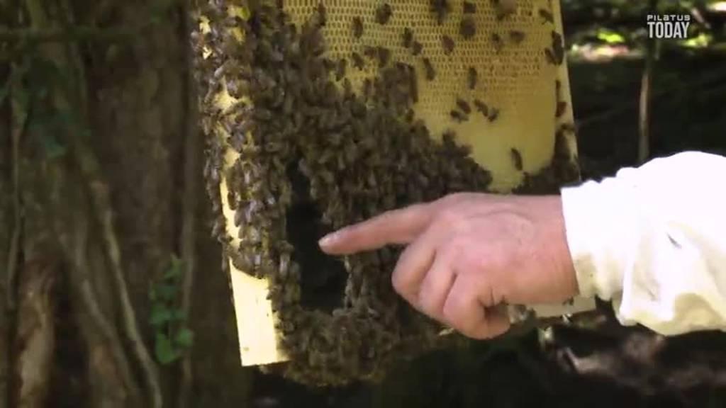 Ein Forschungsprojekt für das Wohl der Bienen