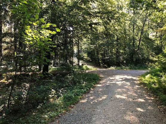 Mehrere Waldwege kreuzen sich.