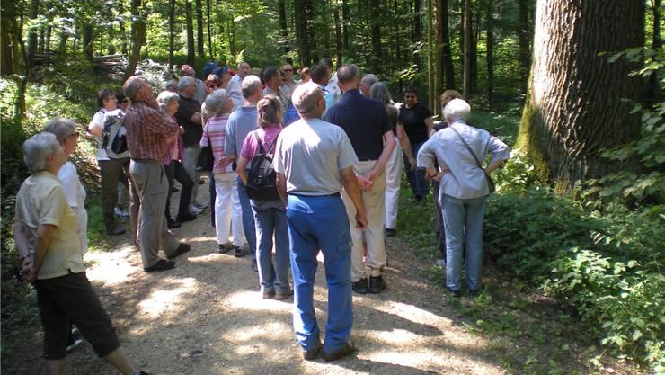 Wandern mit dem Gesundheitsforum durch die idyllischen Wälder rund um die Zähringerstadt. zvg