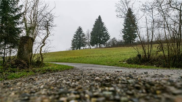 Das «Rotzenbühl» bei Oberwil-Lieli hat möglicherweise einst einer Person mit Namen «Razo» gehört.