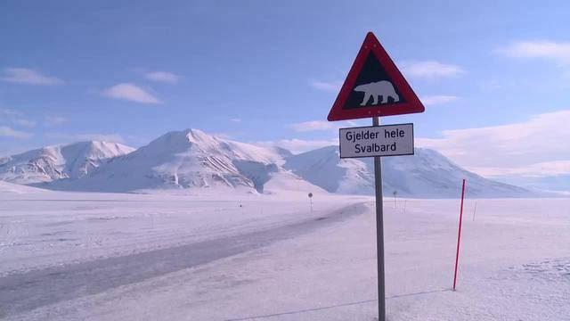 Bär am Nordpol Folge 1