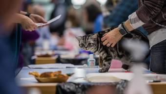 Katzenausstellung in Zuchwil