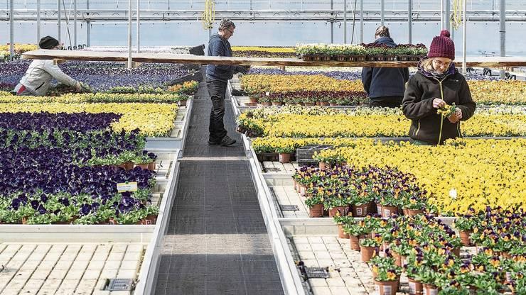 Arbeiten hier vier Gärtner oder doch eher drei Gärtnerinnen und ein Gärtner? Laut Duden ist bald nur noch die zweite Formulierung korrekt.