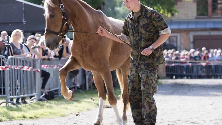 IEin Rekrut führt Interessierten eines der 80 Pferde von Hefenhofen TG vor.