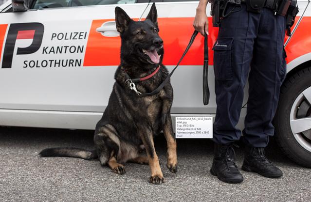 Polizeihund KAOP Solothurn