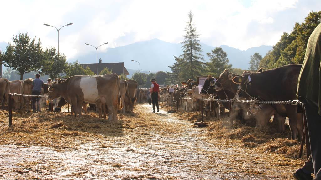 Für die Viehschau in Appenzell werden diverse Strassen gesperrt. (Archiv)