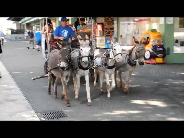 Eselskutsche auf dem Grenchner Marktplatz