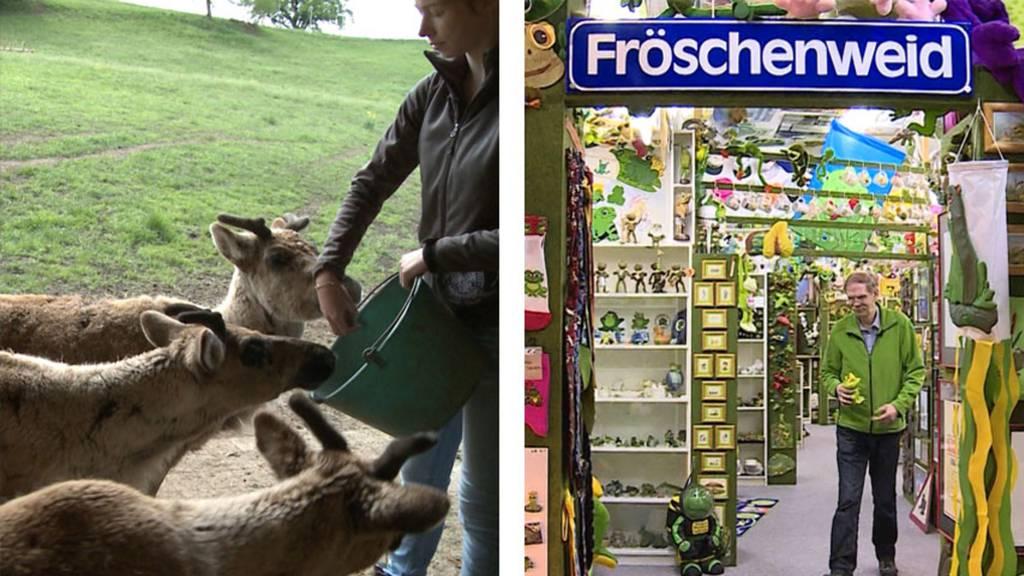 Rentier-Zucht / Froschmuseum