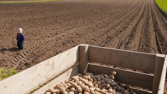 Das Kartoffelfeld von Hans Koch im Seeland (Symbolbild)
