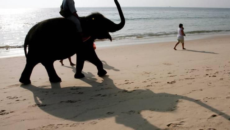 Ein Tourist reitet auf einem Elefanten auf der thailändischen Ferieninsel Phuket - Tierschützer finden das unverantwortlich, so ist gerade erst ein schottischer Tourist von einem Elefanten totgetrampelt worden. (Archiv)