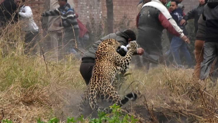 Der Leopard fiel Einwohner in Gärten und Strassen an.