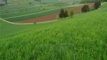 Zur geplanten Deponie Buech in Herznach sind beim Kanton mehrere hundert Eingaben eingegangen. Archiv/GHI